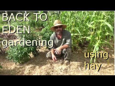 Back to Eden gardening using hay | Columnists | scnow.com