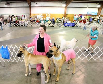 Myrtle Beach Kennel Club Visits Florence For All Breed Show