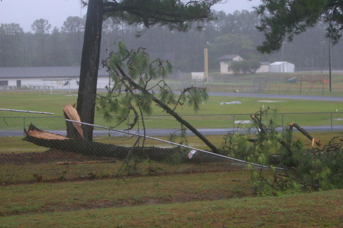 Tree down on West Florence High School grounds
