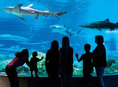 OdySea Aquarium rated autism-friendly