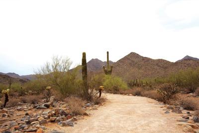The McDowell Sonoran Preserve