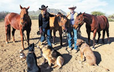 Therepy Horses Scottsdale McDowell Sonoran Preserve
