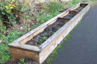Special education classroom to incorporate garden into lesson plans