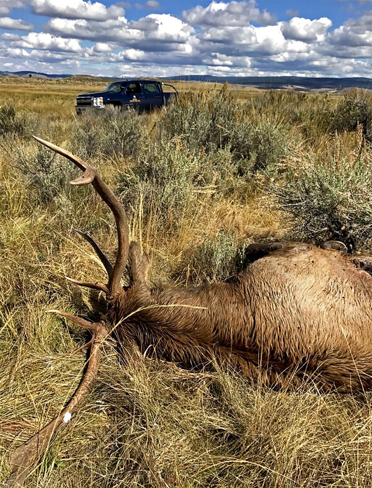 Poachers beware