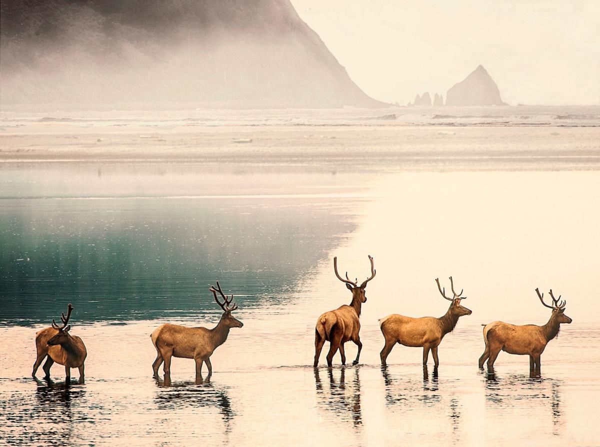 'Animal versus animal' as elk, dogs clash