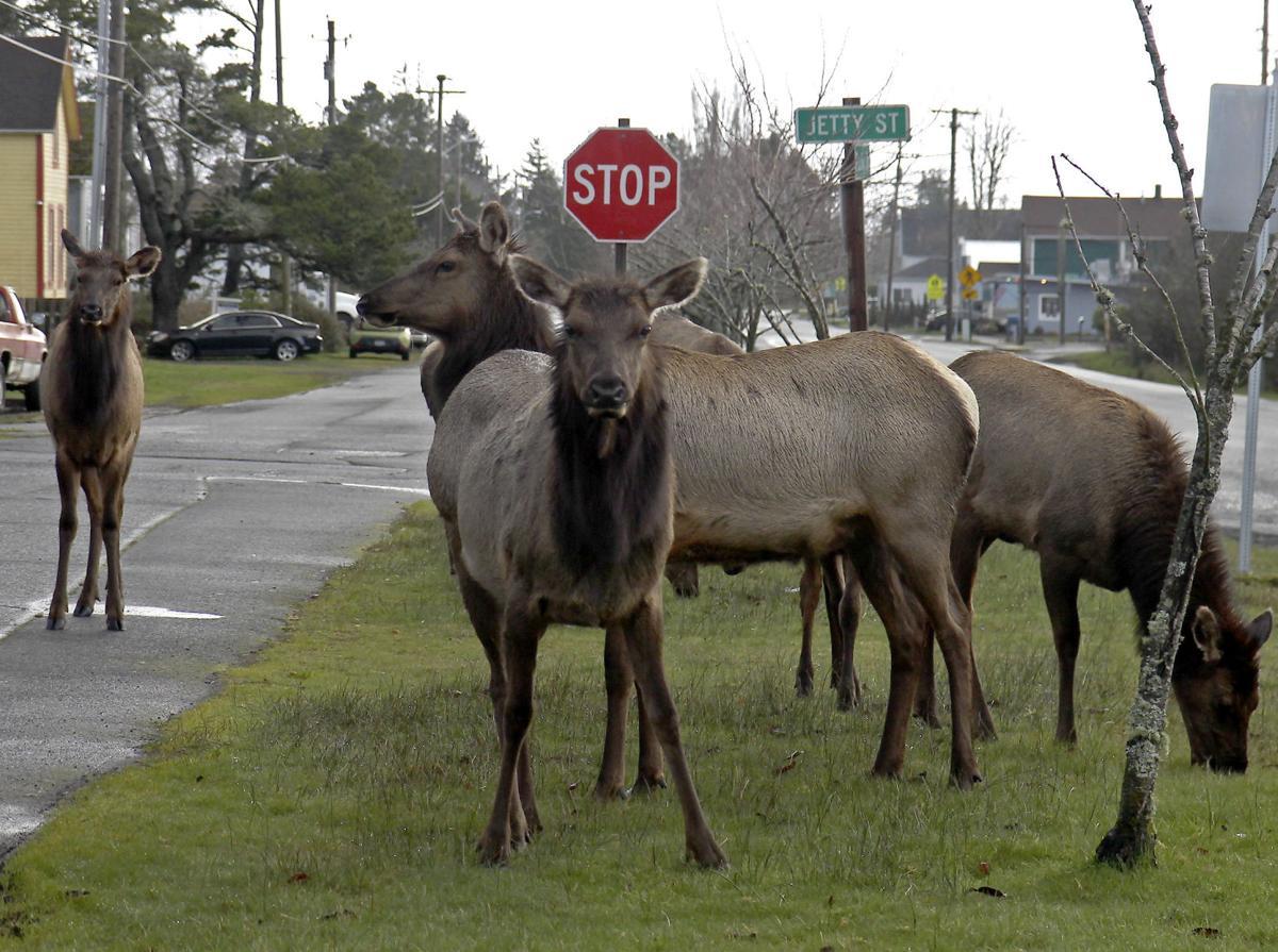 Elk concerns on the rise in Warrenton
