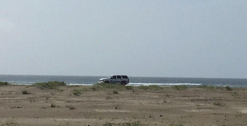 Patrolling the beach