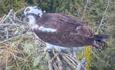 View from the osprey cam