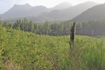 Timber project raises concerns about public process