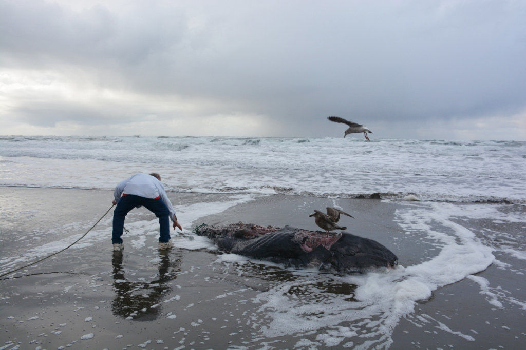 Small whale washes ashore in Gearhart