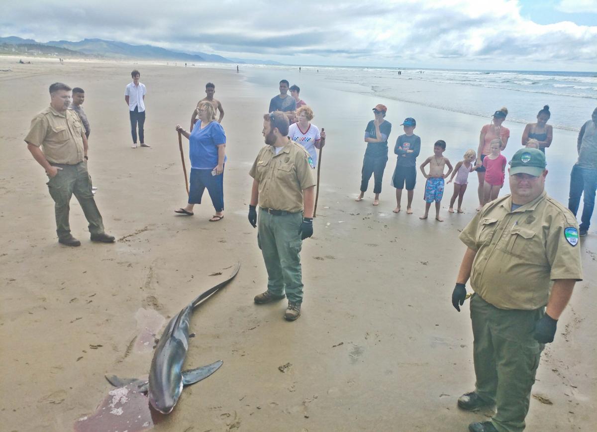 Shark draws attention
