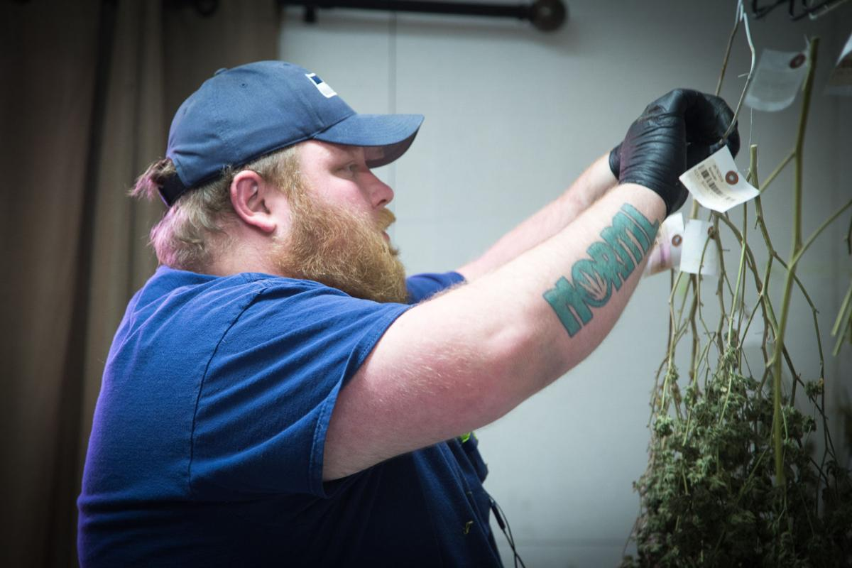 Vancouver Weed Company employee Bobby Crislip