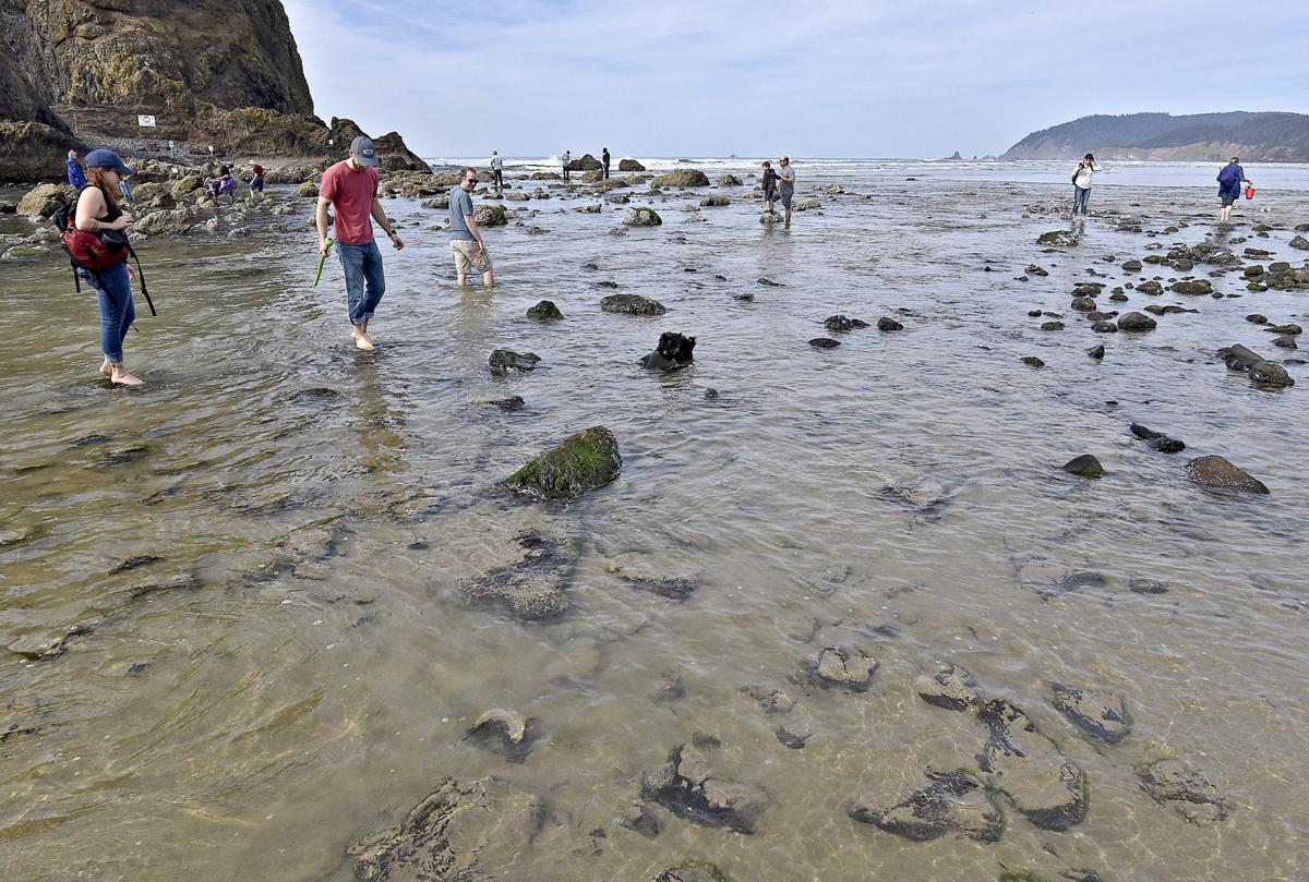 Health advisory issued for Cannon Beach ocean waters