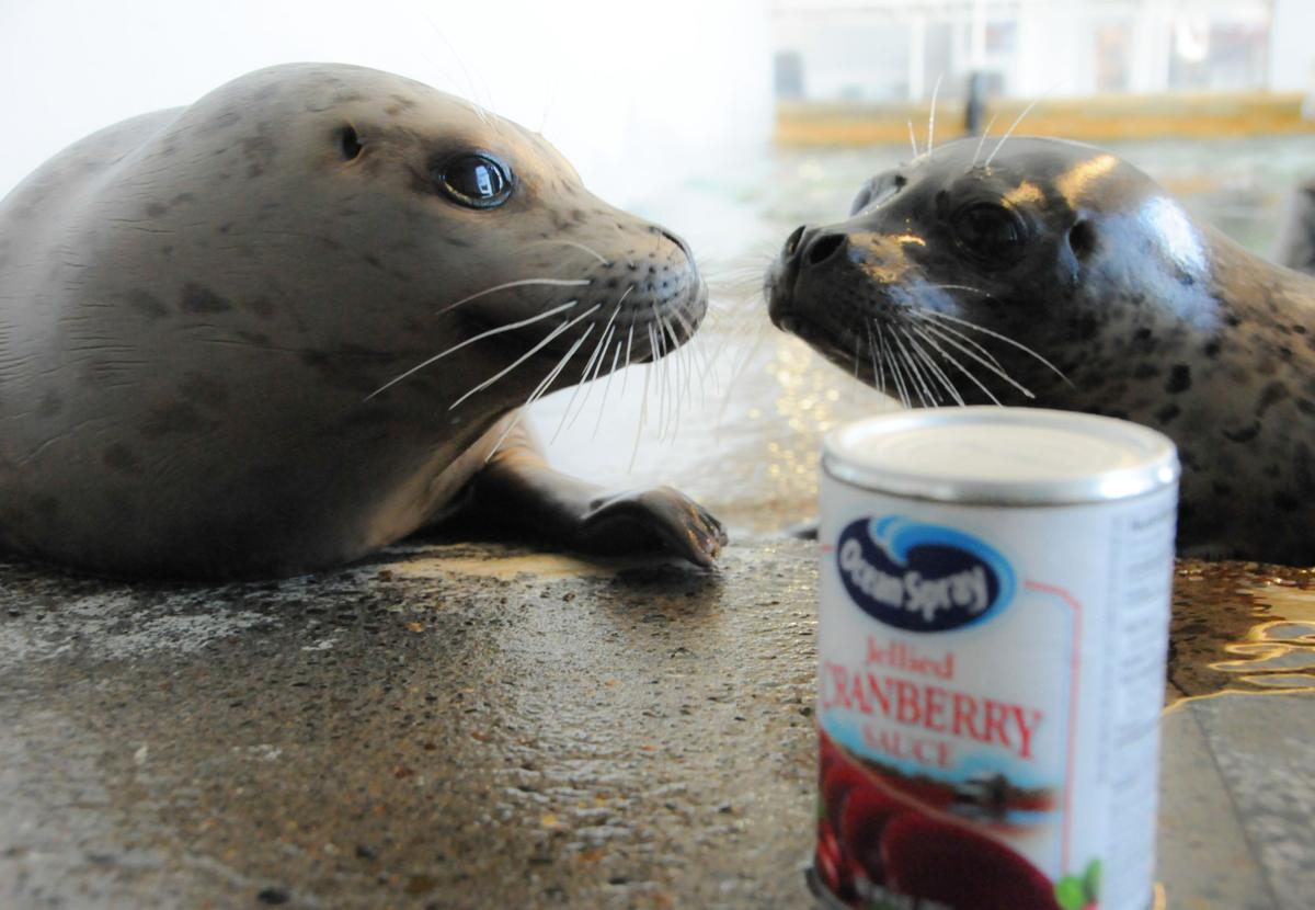 Feed the seals, help the food bank