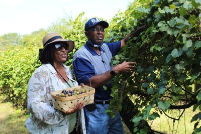 Local growers offer 'U-Pick' experiences during COVID