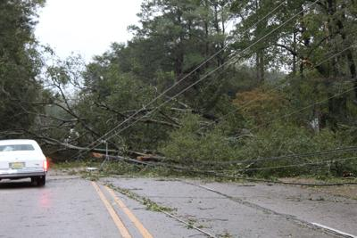 Trees down after Zeta