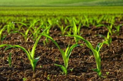 Crops stock image