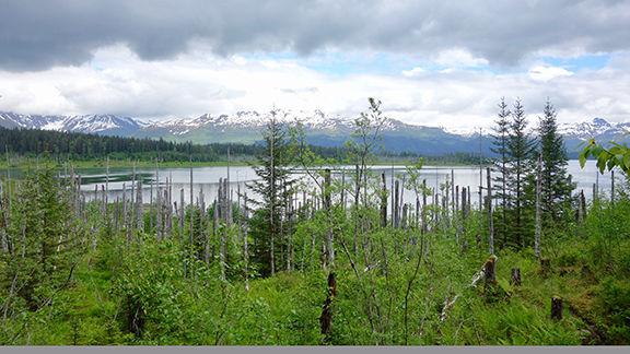 Russell Fjord vista.jpg