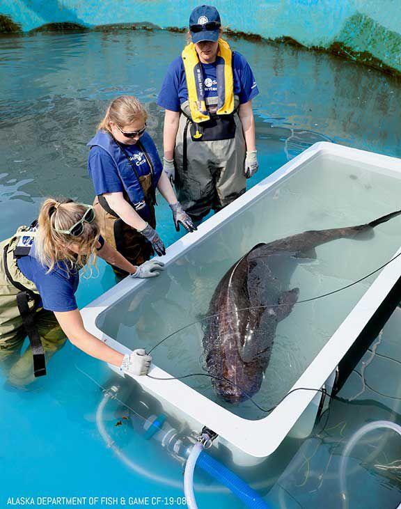 Shark and Team in Pool.jpg