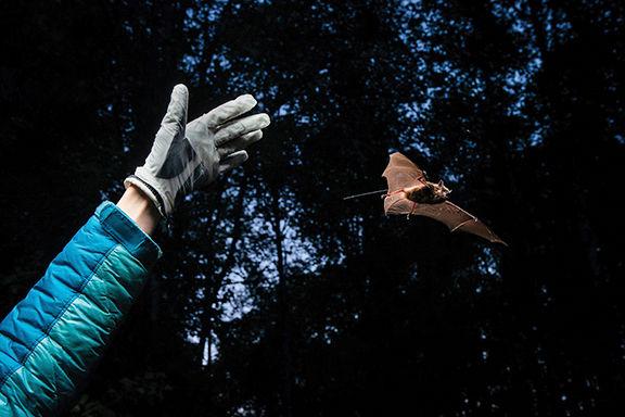 Jesika Reimer releases a bat