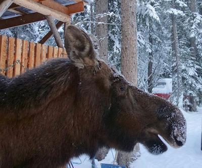 moose nose.jpg