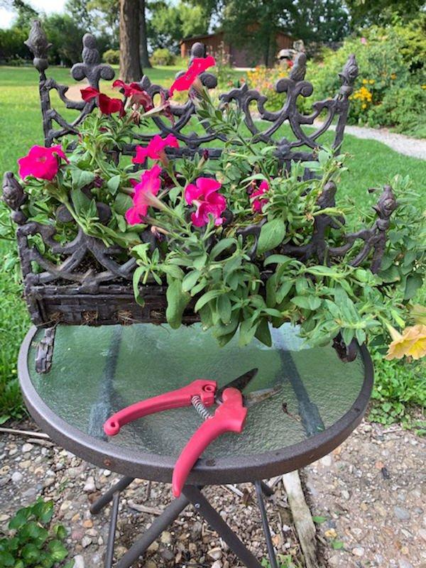 Annuals cycling down