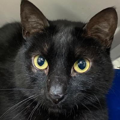 Cat rescued from San Mateo-Hayward Bridge utility box