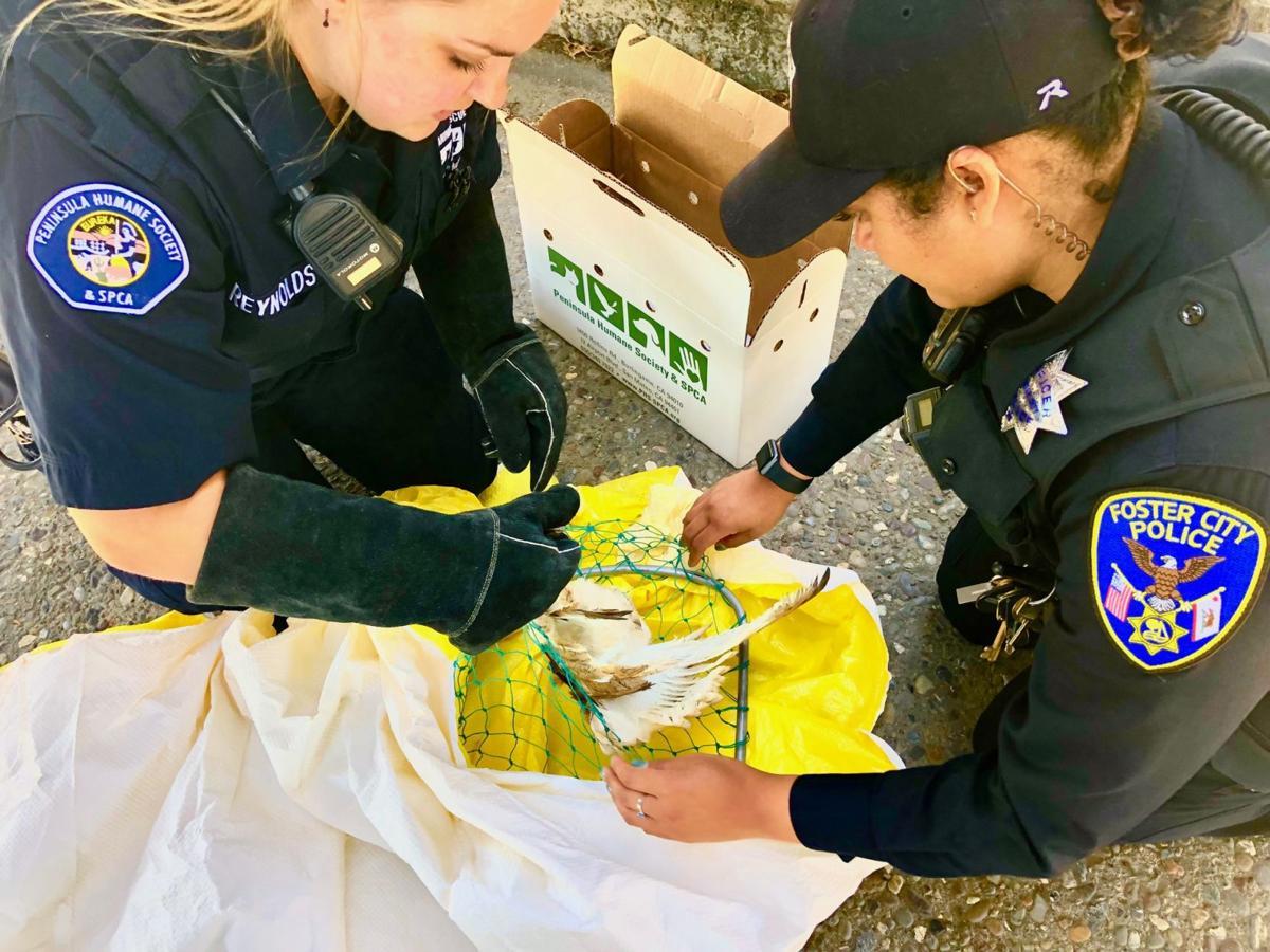 Peninsula Humane Society Animal Control Officer Samantha Reynolds and Foster City Police Officer Katherine Perez.JPG