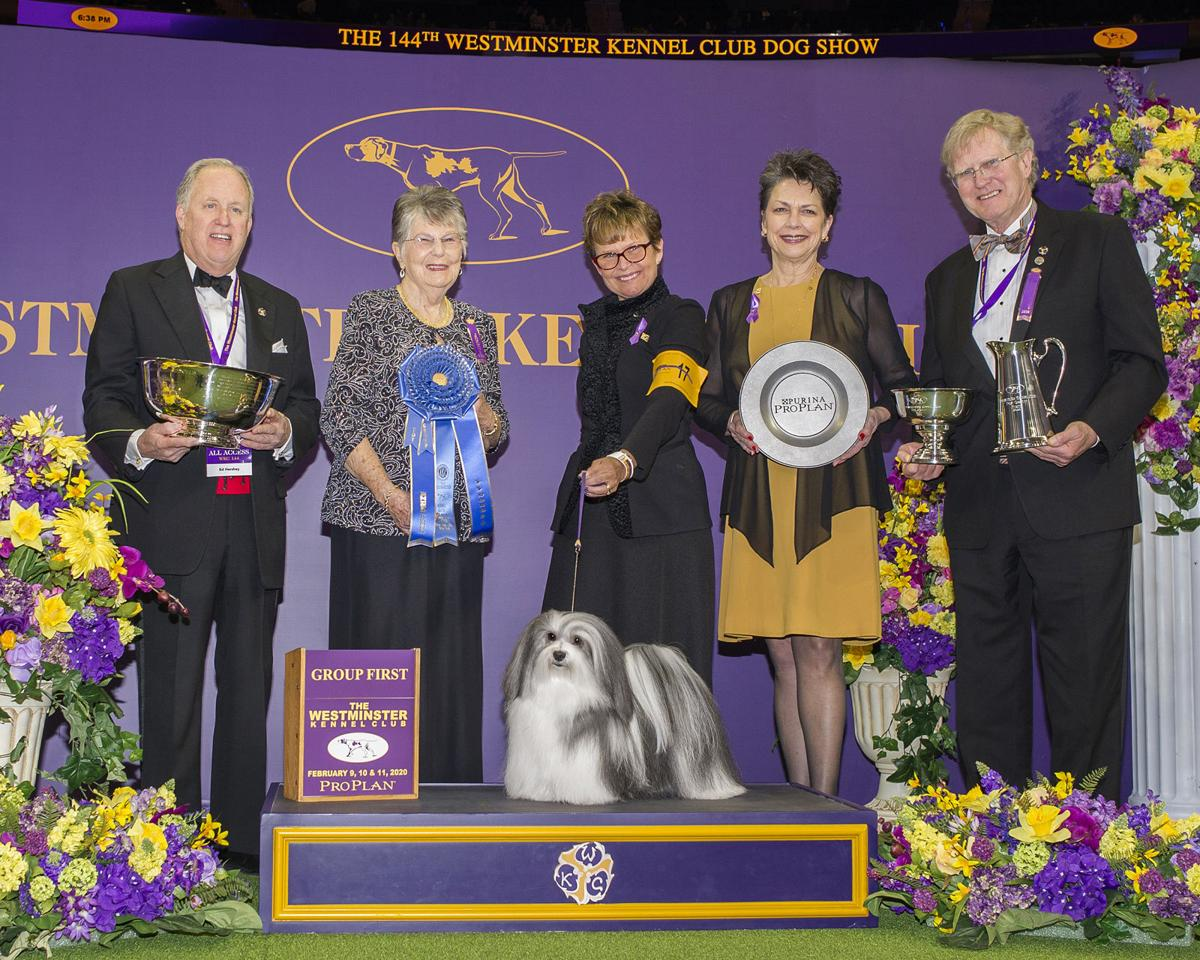 Dog Bred By Menlo Park Resident Wins Again At Westminster Kennel