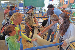 Hard work on display: 4-H members raise animals for San Mateo County Fair