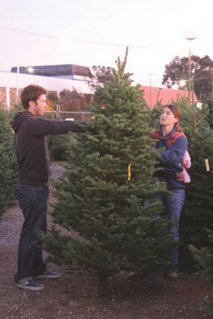 Picking the perfect Christmas tree