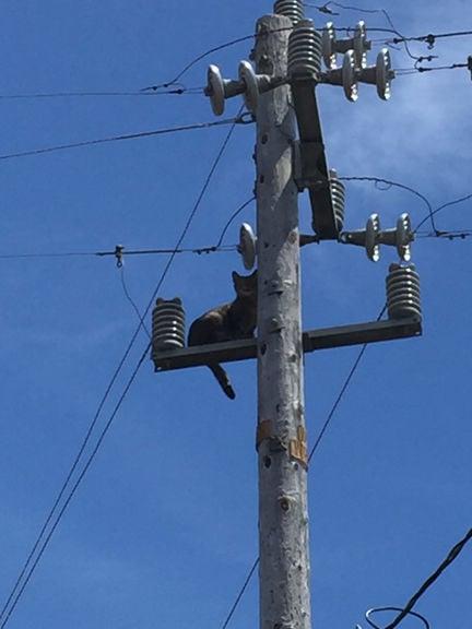 San Bruno utility pole