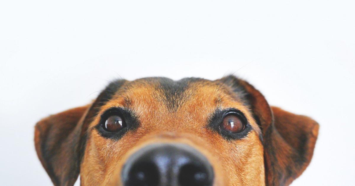 Pleasanton's Harvest Moon Cluster dog show to begins