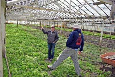 Pot nursery setting up shop | Local News | smdailyjournal com