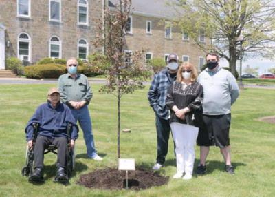 PHE COVID tree planting