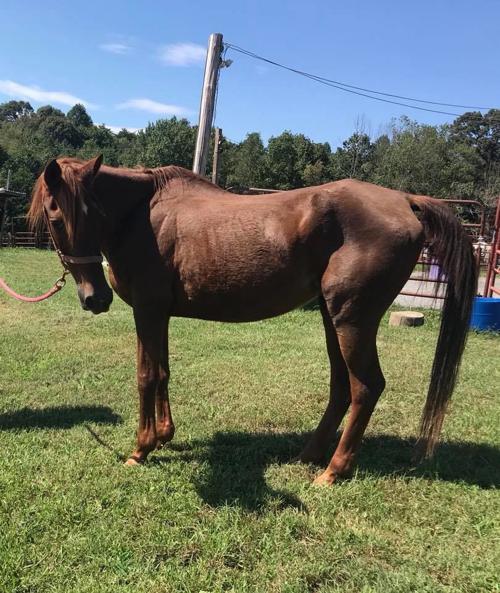 Roanoke Valley Horse Rescue