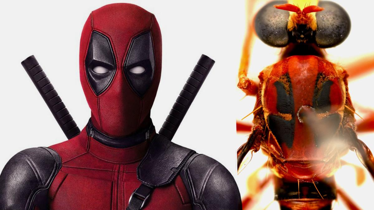 Australia names new species after Deadpool, Thor, and other Marvel favorites