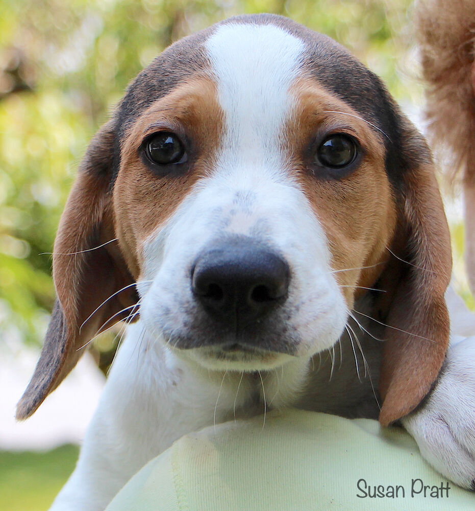 Pets of the Week for Adoption - Peter
