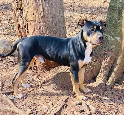 Pets of the Week for Adoption - Wigglin