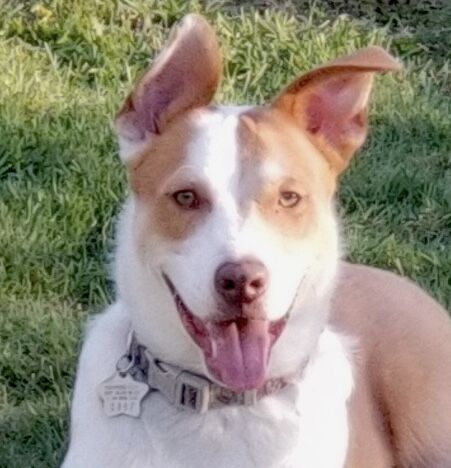 Pets of the Week for Adoption - Waylon