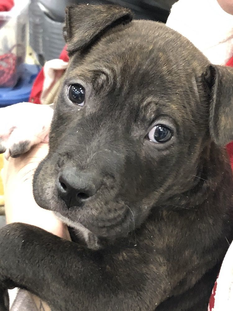 Pets of the Week for Adoption - Taz
