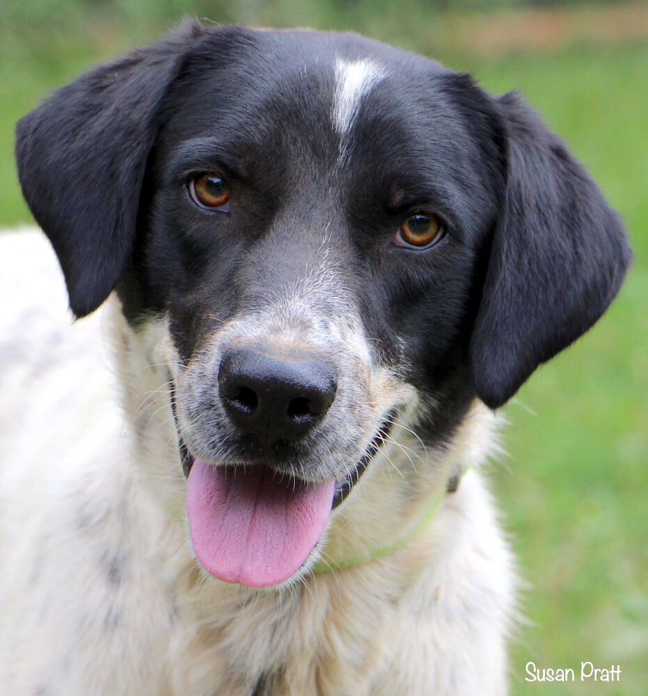Pets of the Week for Adoption