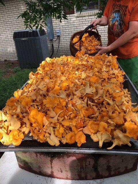 Chanterelle mushrooms.