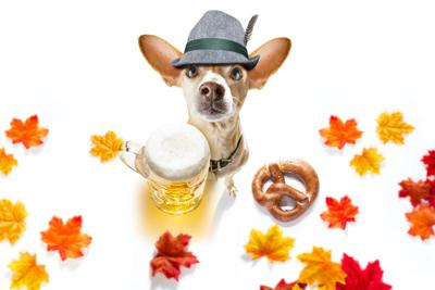 Diamond Dog Park to host first Doggie Trot Show Nov. 9