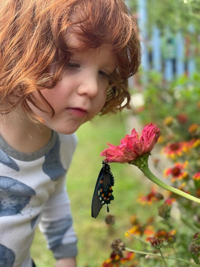 Katy's son watches a recently emerged Pipevine Swallowtail finish drying its wings