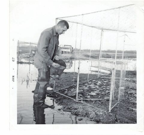 """McDaniel baiting """"walk-in"""" duck trap with corn. Trap made of aluminum tubing and plastic netting."""