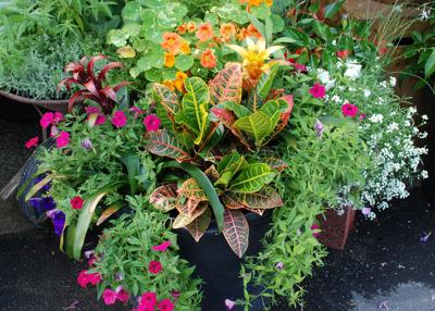 Take the hassle out of watering container gardens