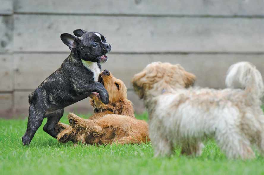 Doggie Dialogues: Stylin' at the dog park
