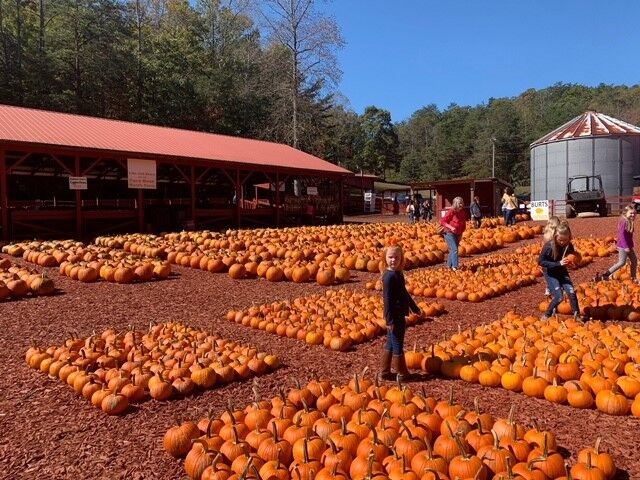 Rows and rows of pumpkins await visitors.
