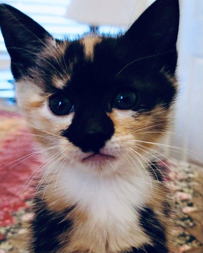 Carmela's kitten, Carmelina